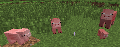 Varying Sizes in Pigs